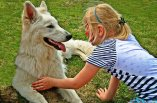 Zabawa z psem